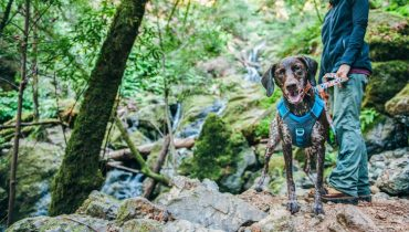 Top Tips for Hiking with your Dog