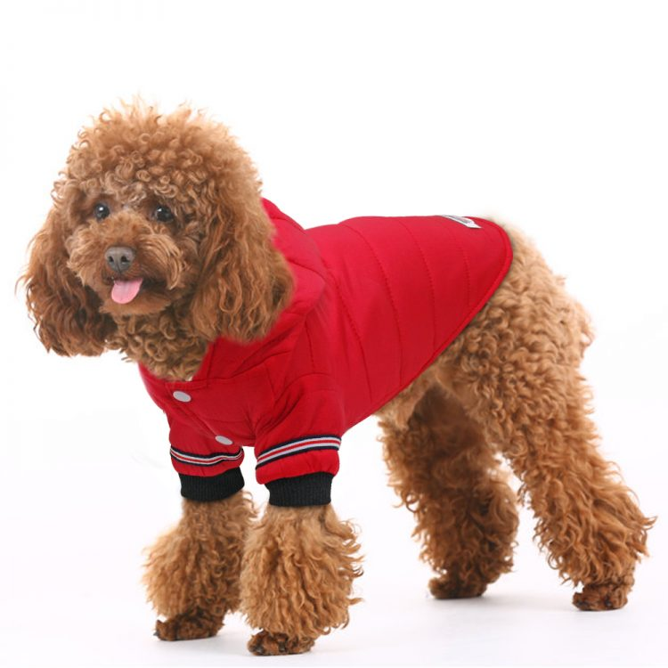 Chic Dog Jacket
