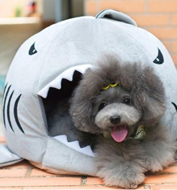 Shark Dog Bed