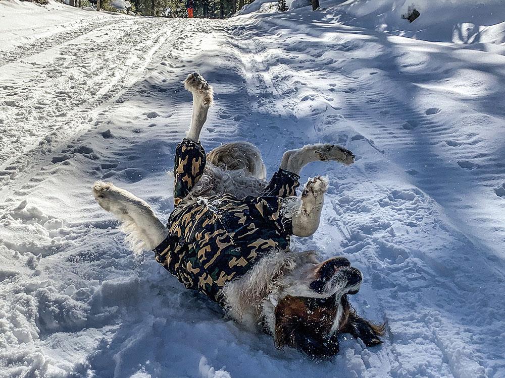 larger dog snowsuit