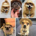 Cute Sun dog Cap