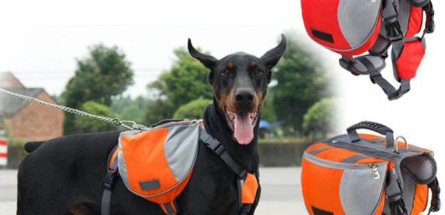 Top 3 Large Dog Backpack Harness