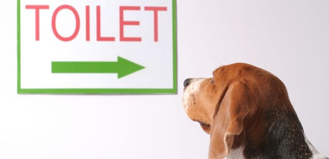 How to Potty Train a Puppy: 12 Steps (with Pictures)