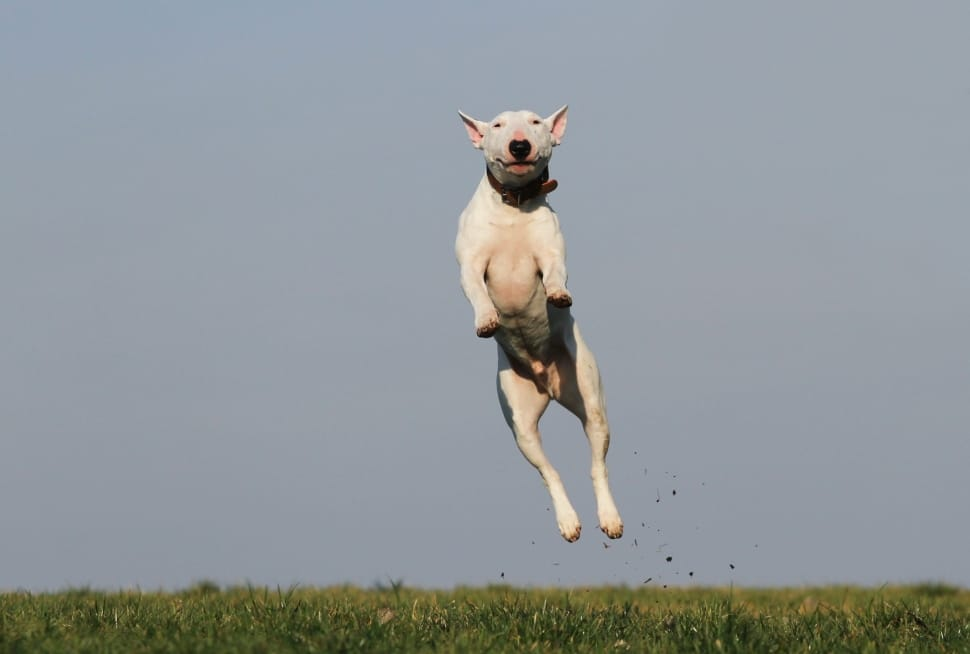 Training Tips for Dogs