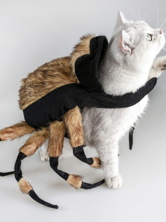 Funny-Spider-Cat-Clothing-Fancy-Dress-Up-Pet-Dog-Halloween-Holiday-Christmas-Party-Costumes-Gifts-Funny-Clothes