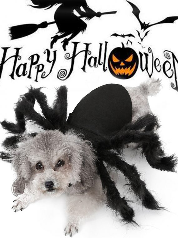 Spider-Wing-Clothes-For-Puppies-Cats-Halloween-Pet-Cat-Dog-Costumes-Cute-Dress-Fancy-Dress-Up-Halloween-Pet-Dog-Cat-Costume