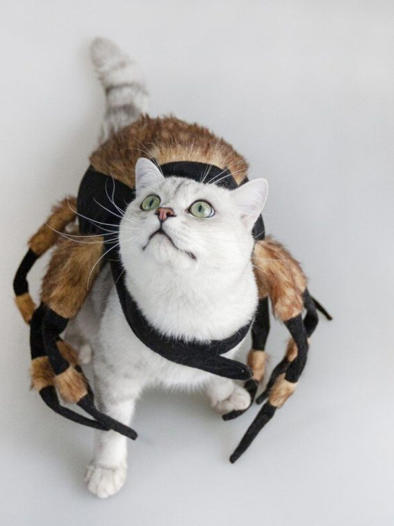 Funny Spider Cat Clothing Fancy Dress Up Pet Dog Halloween Holiday Christmas Party Costumes Gifts Funny Clothes