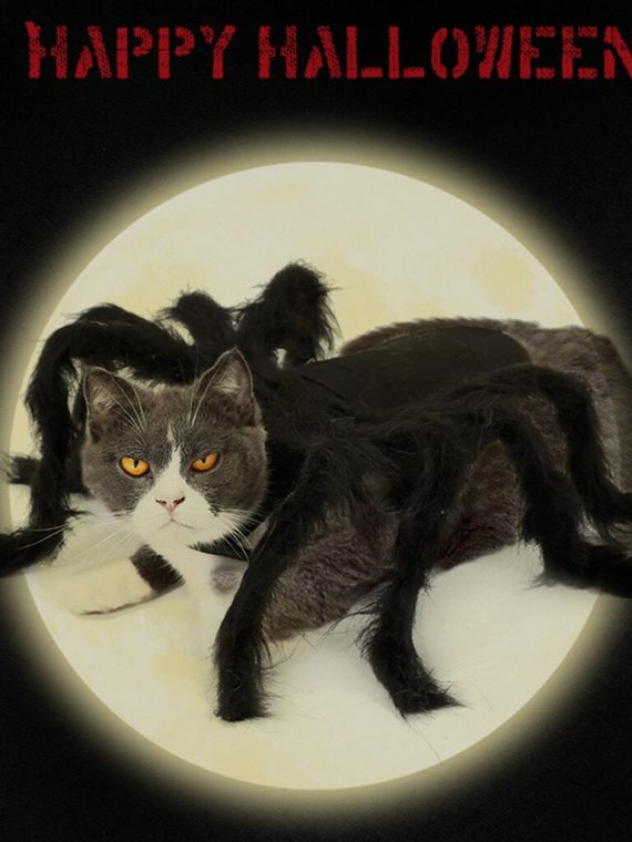 Spider Wing Clothes For Puppies Cats Halloween Pet Cat Dog Costumes Cute Dress Fancy Dress Up Halloween Pet Dog Cat Costume