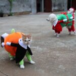clothes for pets