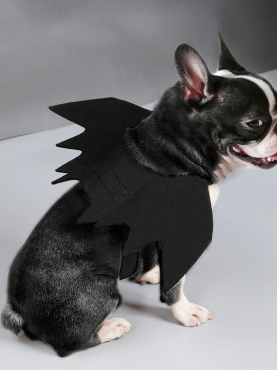 Pet-Felt-Cloth-Costume-Cosplay-Bat-Wings-for-Cat–Fancy-Dress-Dogs-Cats-Playing-Pet-Accessories-Cute-Halloween-Clothes