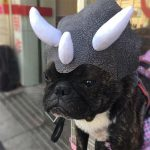 Small pet dog cat hat Cloth leather Dinosaur Headgear Hat Dog Adjustable Buckle Costume Festival Cosplay 2018 fashion