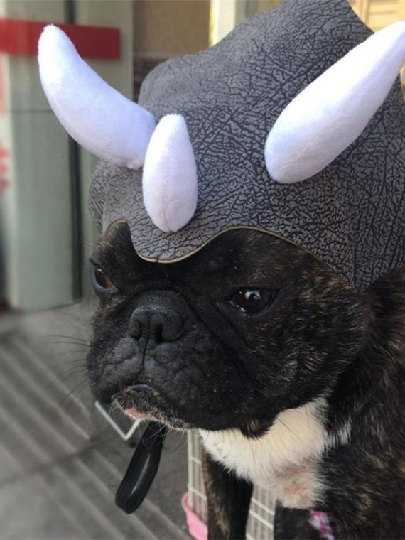 Small-pet-dog-cat-hat-Cloth-leather-Dinosaur-Headgear-Hat-Dog-Adjustable-Buckle-Costume-Festival-Cosplay-2018-fashion