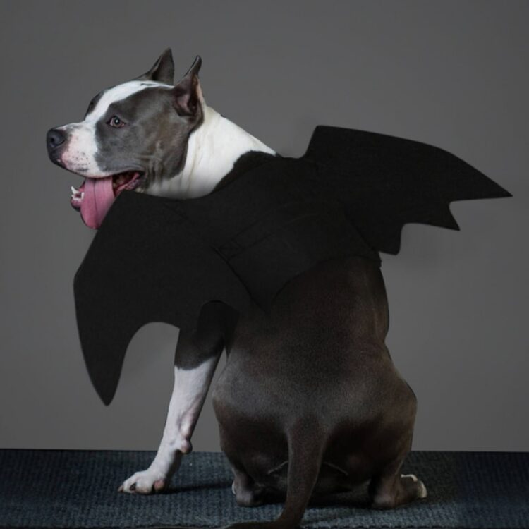 Pet Felt Cloth Costume Cosplay Bat Wings for Cat Fancy Dress Dogs Cats Playing Pet Accessories Cute Halloween Clothes