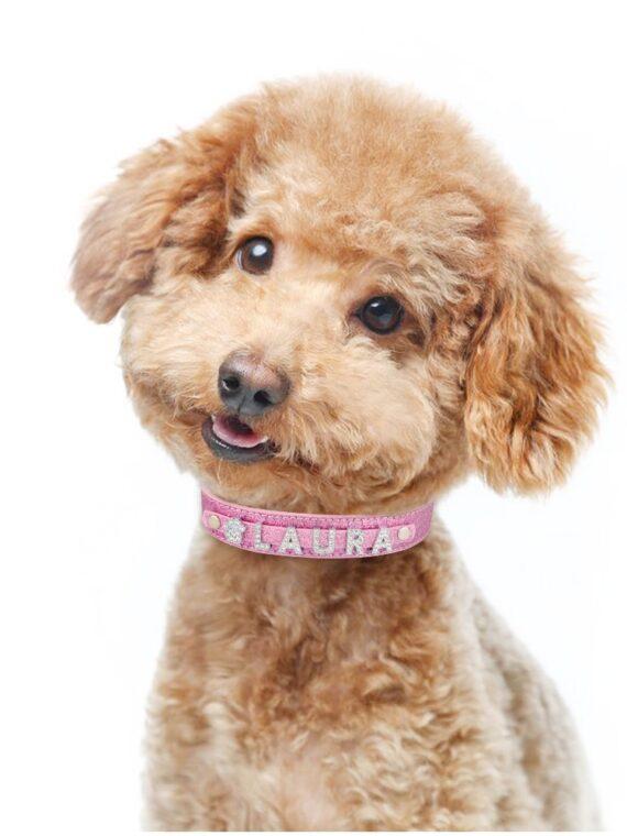 DogMEGA Personalized Dog Collar | Custom Dog Collars | Custom Leather Dog Collars