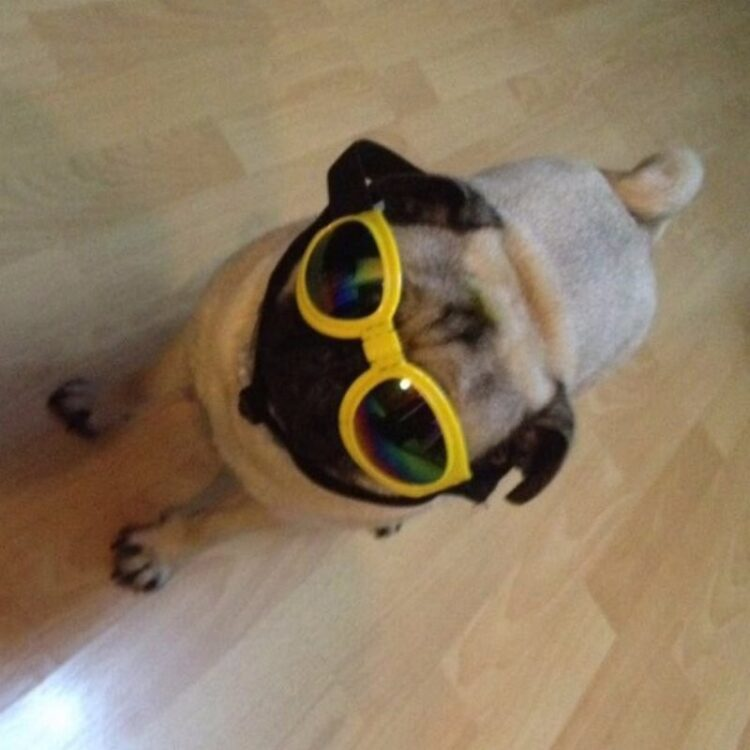 Foldable Dog Sunglasses UV Protection