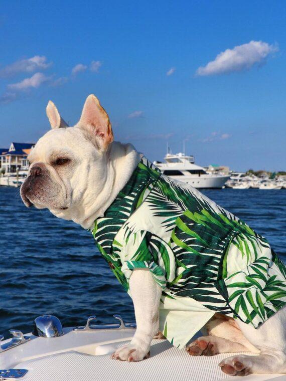 DogMEGA Hawaiian Shirt for Dog