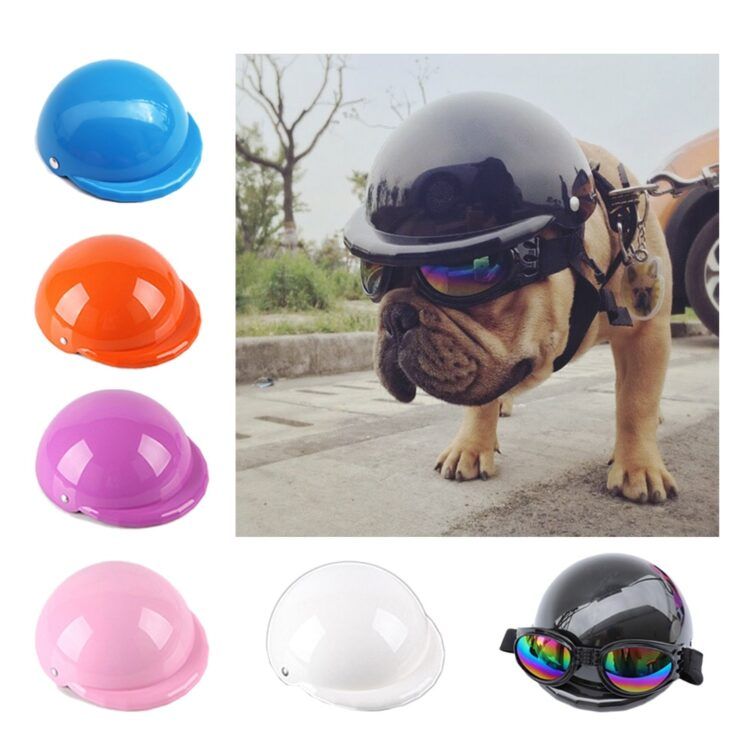 dog helmet and goggles