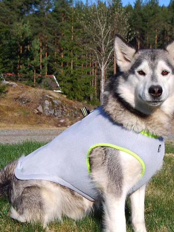 DogMEGA Dog Cooling Vest Harness Cooler Jacket