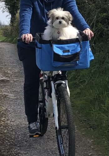 Dog Basket for Bike Weight Limit 22 lbs