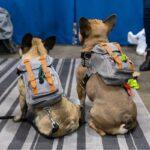 Classic Dog Backpacks