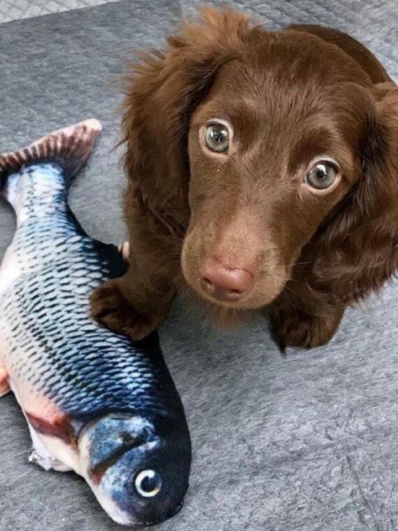 Jumping Fish Interactive Dog Toy (1)