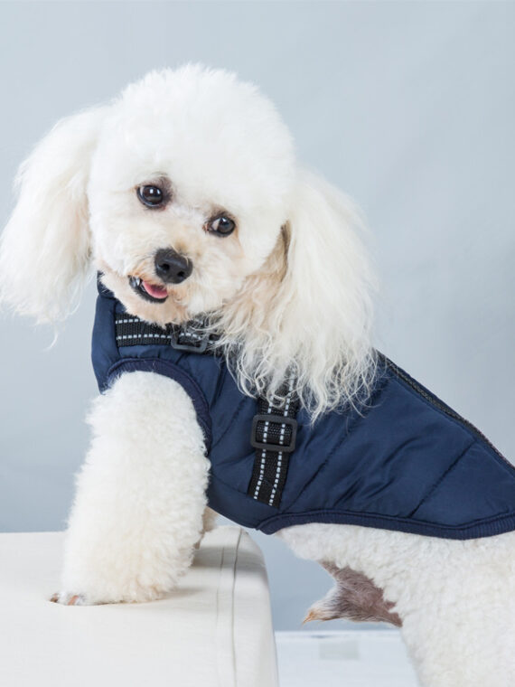 Waterproof Dog Jacket with Harness | Warm Coats for Small Dog